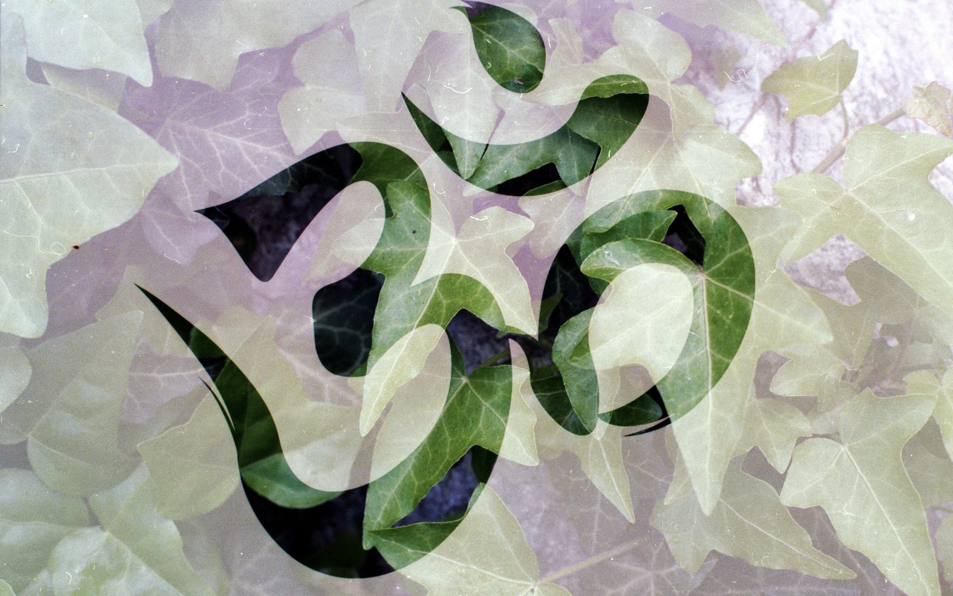 OM with leaves